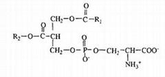Phosphatidylserine (PS) 8002-43-5