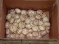 normal white garlic  2