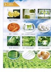 Laiwu Sumptuous Foods Co.,Ltd.