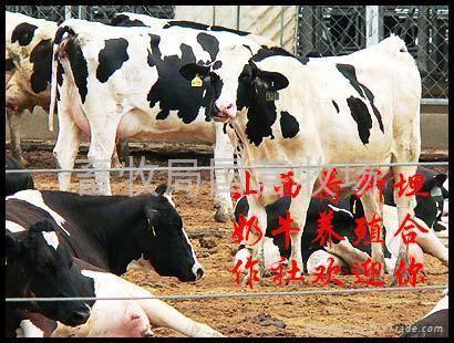 山西省肉牛养殖_山西博雅肉牛养殖场 (中国 山西省 生产商) - 公司档案
