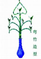 lucky bamboo---heart shape bamboo
