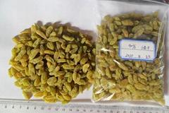 sell Green Raisin