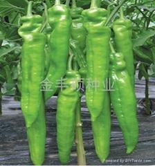 金豐-辣椒種子