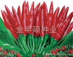 天紅-朝天椒種子