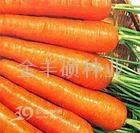 日本六寸-胡萝卜种子