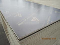 European formwok plywood