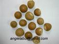 Fresh, frozen and dried betel nut/ areca nut 2