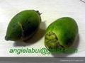 Fresh, frozen and dried betel nut/ areca nut 3