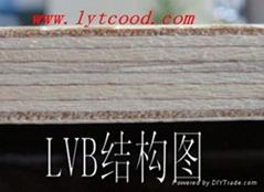 供應雙面漂白楊木LVB 膠合板