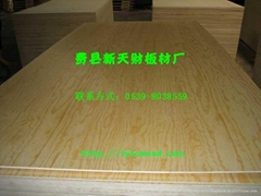 供應E0,E1,E2松木面底楊木芯膠合板