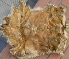 Dry goat skin