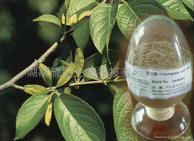 杜仲金银花绿原酸 1