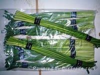 garlic sprout 4
