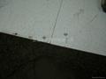 上海直鋪式通體防靜電瓷磚