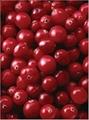 Cranberry P.E.