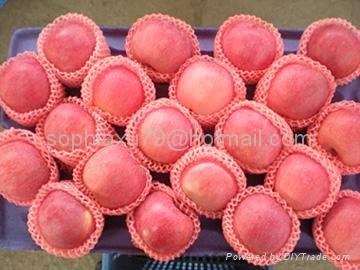 offer fresh red Fuji apple 2