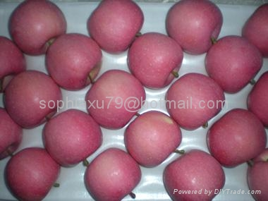 offer fresh red Fuji apple 4