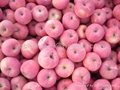 offer fresh red Fuji apple 5