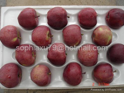 Fresh Huaniu Apple 1