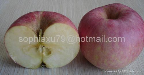 Qinguan Apple 1