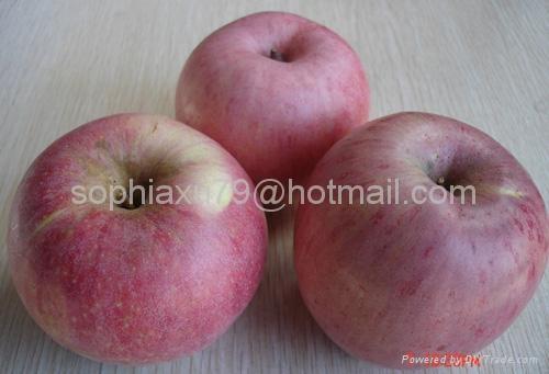 Qinguan Apple 3