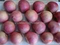 Qinguan Apple 4
