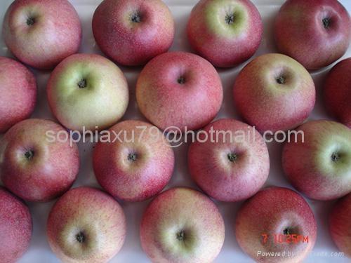Qinguan Apple 5