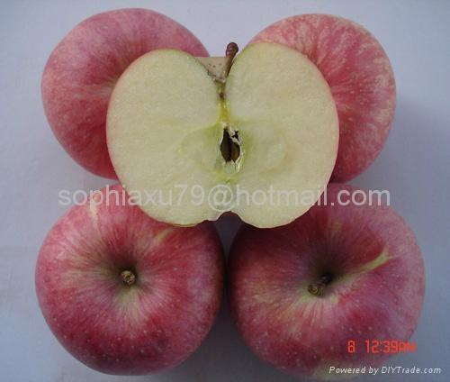 offer fresh red Fuji apple 1