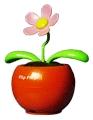 太陽能蘋果花