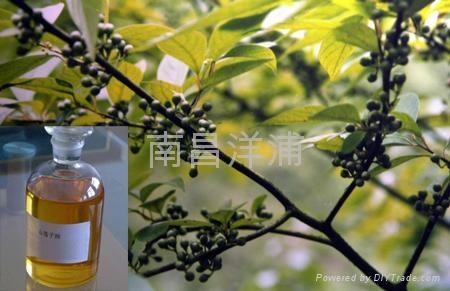 山苍籽油 1