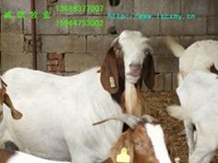 供山東誠信牧業肉牛肉羊養殖基地