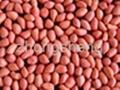 Red skin peanut kernel 2