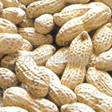 peanut in shell 1