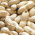 peanut in shell 3