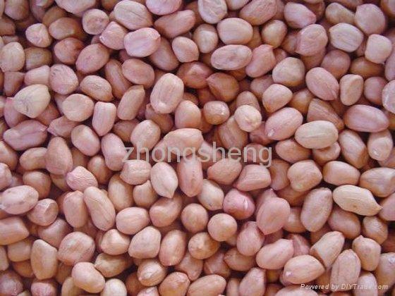 2012 new crop shandong peanut kernel  4