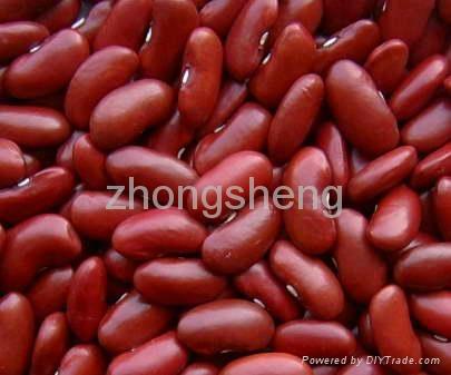 British type dark red kindey bean 1