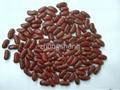 British type dark red kindey bean 3