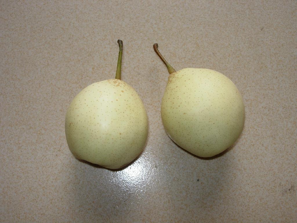 ya pear 4