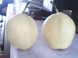 su pear 2