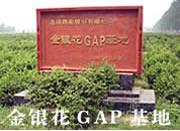 合作建设金银花GAP基地 1
