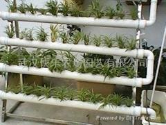 陽臺上的水培蔬菜