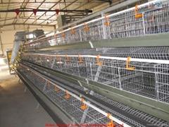 Auto poultry farm equipment