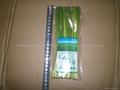 garlic sprout 2