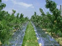 桃树专用反光膜