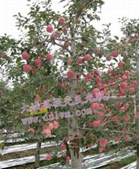 果树反光膜
