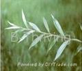 White Willow Bark P . E .