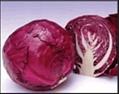 2012 chineses fresh cabbage 2