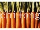 2012 new fresh carrot in carton