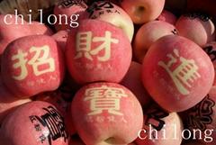 fresh new apple