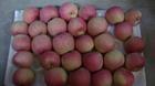 new fresh apple in China